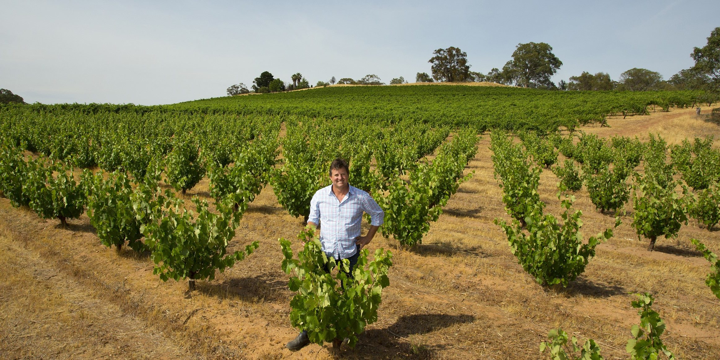 Dean Hewitson at Hewitson Baby Bush Vineyard # 1 WM